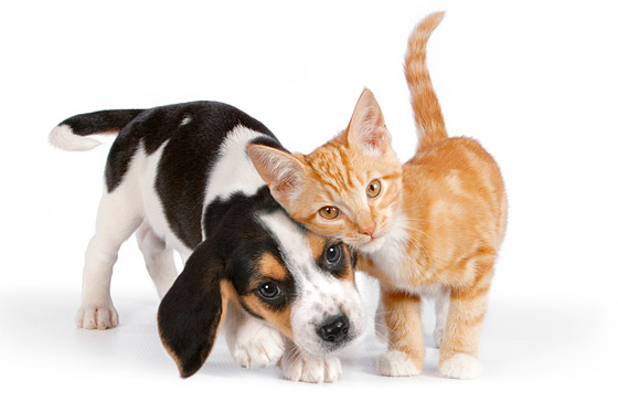 dog-cat-stock-photos